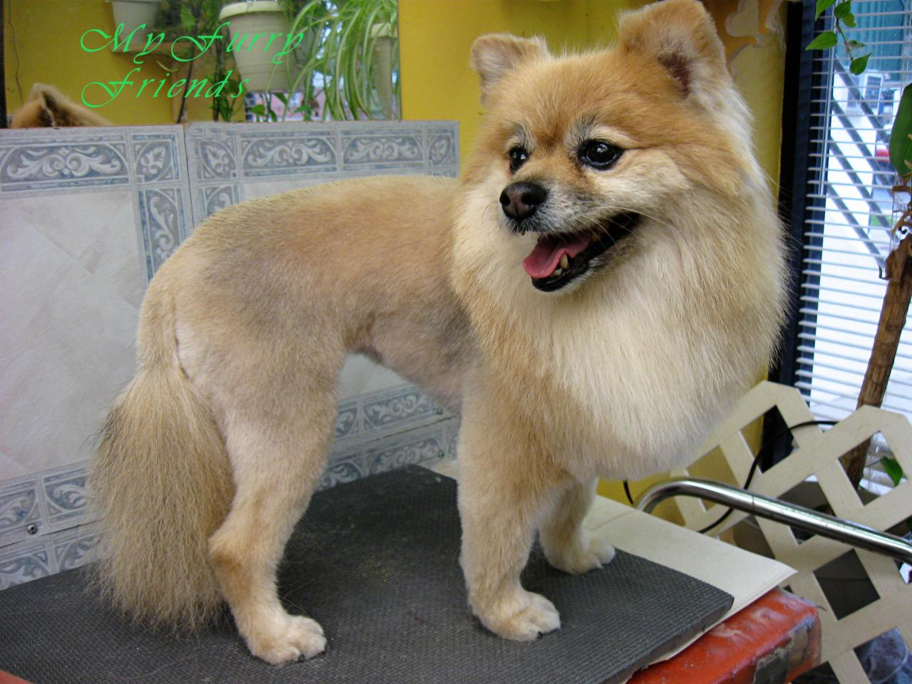 My Furry Friends Pet Grooming Self Serve Pet Wash Before After