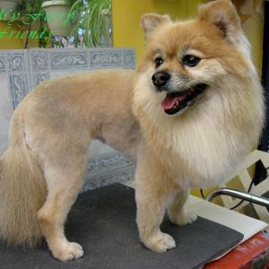 My furry friends pet grooming self serve pet wash before after my furry friends pet grooming self serve pet wash before after photos solutioingenieria Image collections